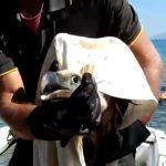 Grifone salvato dai Vigili del Fuoco