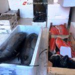 """Operazione """"Confine illegale"""", multe e pesce sequestrato"""