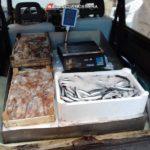 La Guardia Costiera sequestra oltre 50 kg di pesce irregolare. Multe per 10 mila euro.