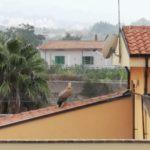 Il grifoncino sorpreso dal temporale, trova riparo sulle terrazze.
