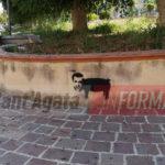 Disegni sui muri contro Salvini, scatta l'inchiesta ad Acquedolci.