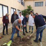 "Itis ""Torricelli"" , piantati due alberelli di ulivo di cultivar santagatese."