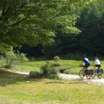 Parco dei Nebrodi nel direttivo dell'Associazione Italiana per l'Ingegneria Naturalistica.