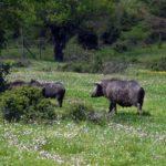Terreni agricoli, sospeso il pagamento del canone di concessione.