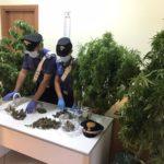 Coltiva piante di cannabis in casa. I Carabinieri arrestano un 45enne e denunciano la moglie.
