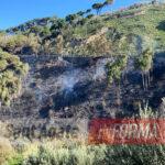 I danni del rogo a Vallebruca e Iria. La pineta incenerita.