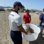 Tartarughe caretta caretta ritrovano la via del mare dalla spiaggia di Sant'Agata
